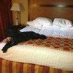 Yara our PWD loves Drury beds.