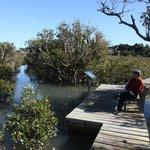 Mangrove track