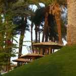 Les palmiers remarquables