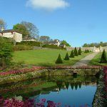 Topiary and pond surrounded by Bergenia 'Overture'