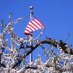Flag with a blossoming tree