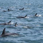 Dolphins very close, this photo taken from the boat.