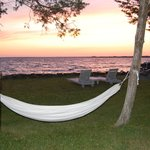Relax and enjoy the hammocks down by the bay!