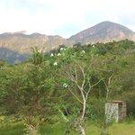 bambua view