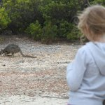 Tammar wallaby outside Karrata lodge