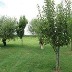 Giardino sul retro vicino al frutteto