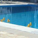 piscina con le paperette di Angelos