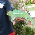 Camaleonti nei giardini dell'hotel