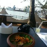 hidden sanctuary. . calamarI -awesome