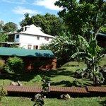Vue sur le parc verdoyant avec des bananes vertes à perte de vue