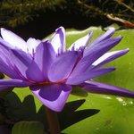 No se el nombre de esta planta, estaba en el agua, esta maravillosa!