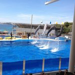 part of the dolphin show
