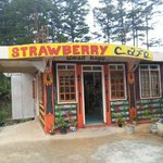 Strawberry Cafe of Sagada