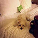 La Quinta Inn & Suites Chicago Tinley Park Foto