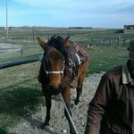Dan Nelson Owner and Rancher