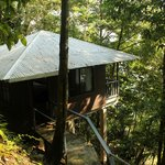 our room : the tree house