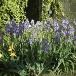 De magnifiques iris à l'entrée du mas