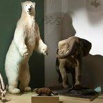 La salle des mammifères