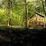A Golden Oak cabin at Blackwood Forest, Hampshire.