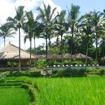 "From the ""romantic dinner"" bungalow you have a view of the entire hotel surrounded by rice field"