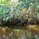 La mangrove dans un tunnel
