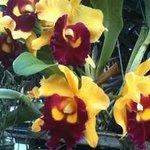 Dans un jardin plein d'orchidées