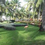 vista jardines del hotel