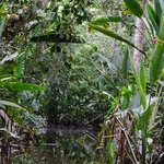 The amazon jungle from our dugout canoe