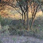 ja, 't is even zoeken maar het is hem echt hoor het luipaard