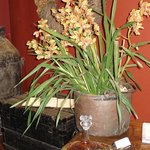 Orchids at Reception