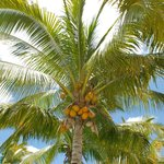 Fresh coconuts are taken from the trees each morning and offered to guests - delicious coconut j