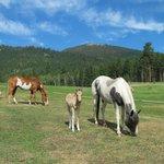 Ranch horses roam free