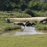Elephants in the river outside our room.