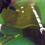 The Australian Shark & Ray Centre