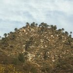 Photo of Reserva Ecologica Oasis de la Campana
