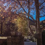 The view of Autumn in Arrowtown, from my seat outside