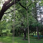 swing in the fruittree at Diofahaz garden camping