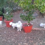 The furry-kids had a lovely yard to play in
