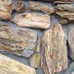 Petrified wood wall.