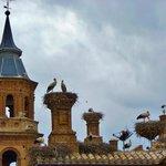 Colonie de cigognes sur la Basilica de Alfaro