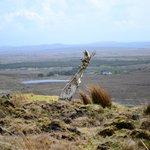 A piece of very old bog oak