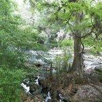 Hillsborough River State Park
