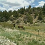 The adjacent creek and a few of the horses grazing contentedly.
