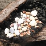 Sea shells collected on the beach.