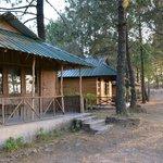 Cottages amongst pine trees at Parkwoods Shoghi.