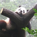 China Odyssey Tour-Chengdu Private One-day Tour