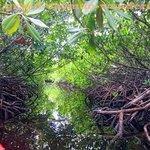Sea Elements kayak threading its way through the mangroves
