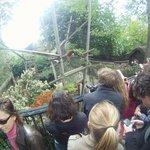 Un monde fou devant le petit enclos ( ex fosse à ours ) de deux pandas roux