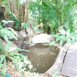 Fish pond beside the walkway heading to the rooms