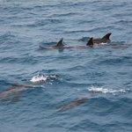 дельфины на морской прогулке